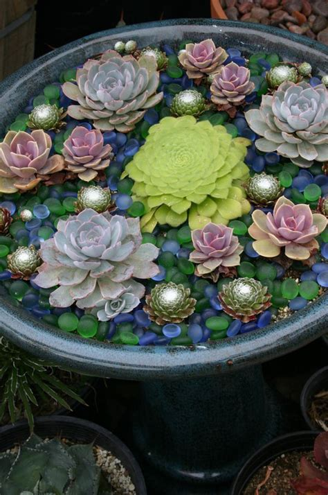 watering succulents in containers succulent container gardens some design guidance for low water landscapes in miniature