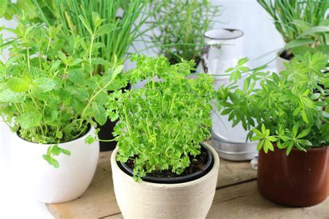 Kräuter Im Garten Pflanzen Zeitpunkt by Paprikapflanze Im Topf Paprika Im Topf Gartenblog Haus