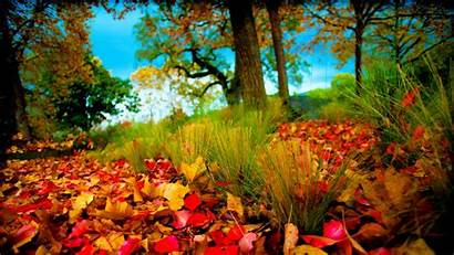 3d Nature Pixelstalk