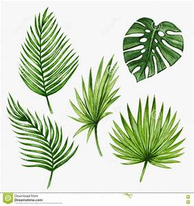 Watercolor Tropical Palm Leaves. Vector Stock Vector ...