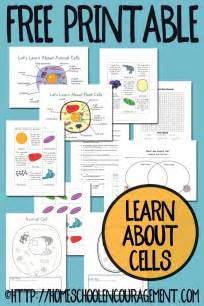 plant  animal cell printables grades   encouraging