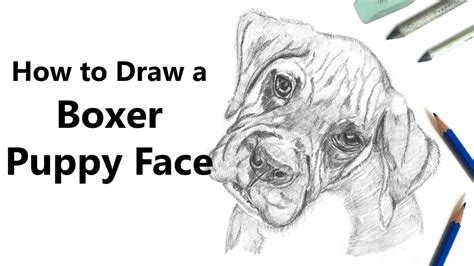 draw boxer puppy face  pencils time lapse youtube