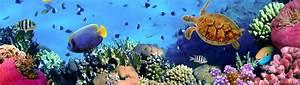 Underwater Dual Screen Wallpapers - Top Free Underwater