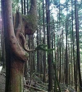 Comment Creuser Un Tronc D Arbre : photo voyez vous dans cette image un tronc d 39 arbre ou bien un mendiant ~ Melissatoandfro.com Idées de Décoration