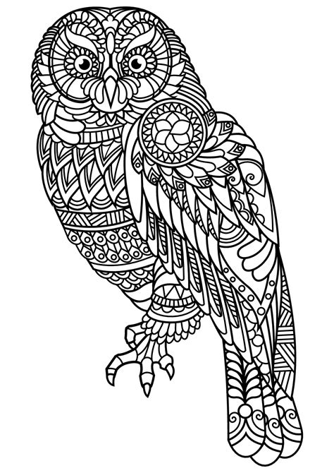 book owl owls adult coloring pages