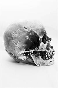 Skull Photography By Amanda Garcia