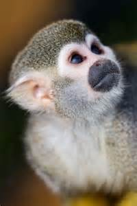 Monkey Squirrel Close Up