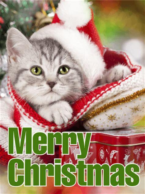 santa cat merry christmas card birthday greeting cards