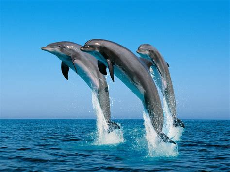 Dolphin Animated Wallpaper - all world wallpapers animated dolphins wallpaper fishes