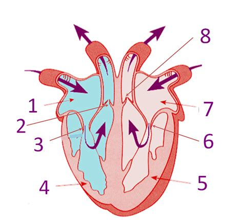 parts   heart proprofs quiz