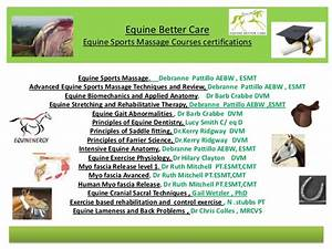 Equine Better Care
