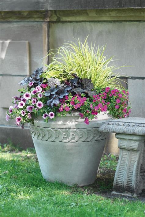 purple grass container ideas ornamental grasses million bells coral bells the purple foliage plant and petunias