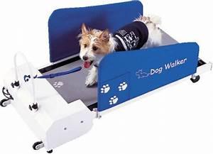 Le forum des border terriers dog walker le tapis de for Tapis de course pour chien