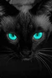 black cats with blue black cat with amazing blue black cat crossing