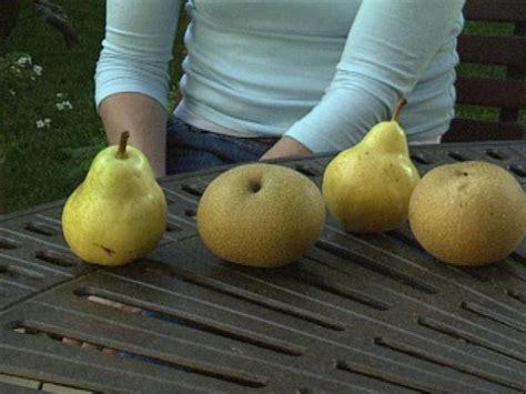grow asian pears  tos diy