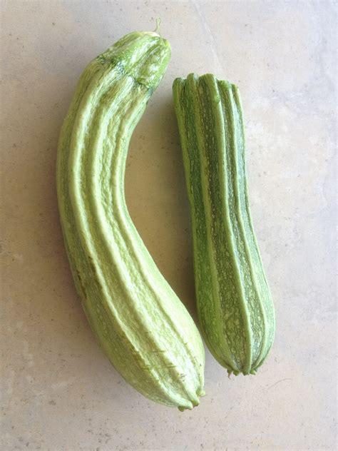 Growing zucchini 'Costa Romanesque' - SpadeRunner