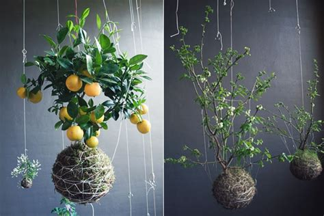 indoor flower garden transform your home into a rainforest jungle list of tropical plants to grow indoo veggieboards