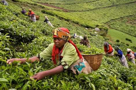 Kivubelt's nomenclature refers to people farm, another term for smallholder coffee growers and the households they support. Rwandan Coffee: A Crop of Hope