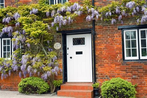 wisteria roots near house how to grow wisteria garden design