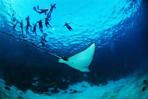 belize hole diving spots hol marine chan dive reserve deep scuba fish water travel reef yacht charter itinerary miss don