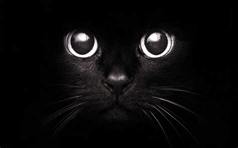 This Fall Consider Adopting A Black Cat Or Dog Phillips