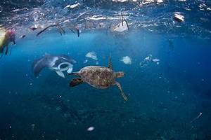 The Best Way to Deal With Ocean Trash