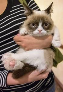 Photos: Grumpy Cat Visits New York City