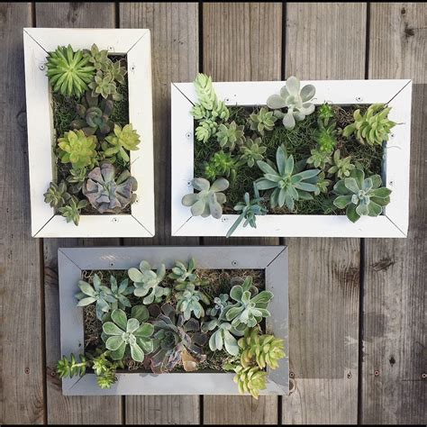 succulent wall planter succulent wall planter hanging living wall picture frame