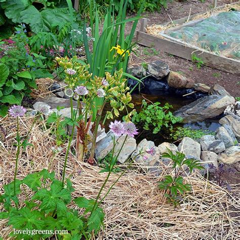 how to make a small garden pond building a small garden pond for wildlife lovely greens garden living and making