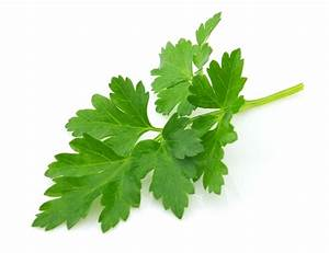 Health benefits of Parsley – 1500+ Health Tips