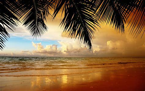 beach sea background hd resolution palm orange clouds