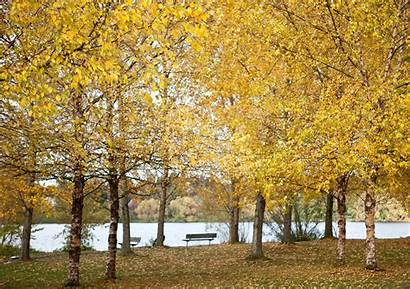 Fall Trees Greenlake