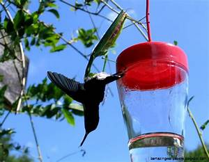 Praying Mantises Are Hunting And Eating Bird's Brain All ...