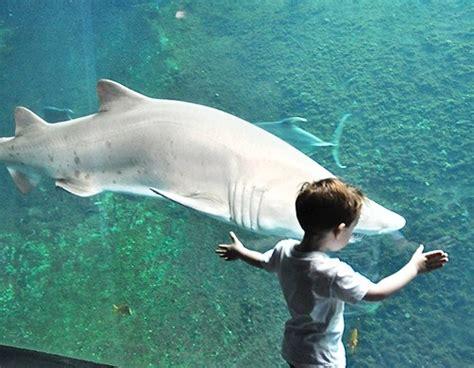 aquarium nausica 225 de boulogne sur mer pas cher 7 90 euros enfant au lieu de 12 90 13 90