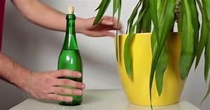 Pflanzen Bewässern Im Urlaub : mit diesem pflege trick muss niemand mehr in deinem urlaub deine zimmerpflanze gie en ~ Eleganceandgraceweddings.com Haus und Dekorationen