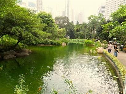 Pond Koi Desktop Park Hong Kong Wallpapers