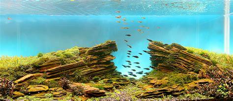 Aquascape Design Software - aquascaping dise 241 a tu pecera con impresionantes modelos