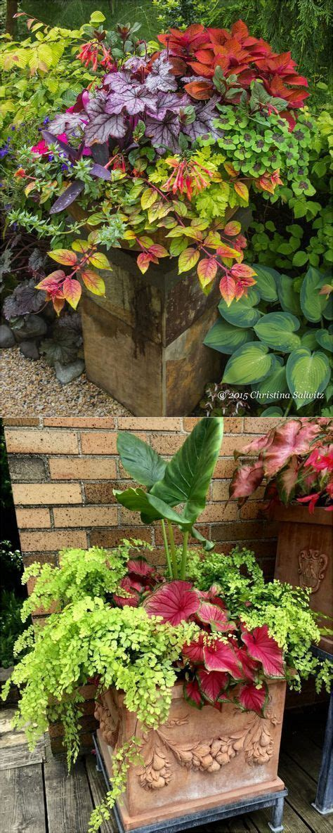 unique container flowers ideas  pinterest patio containers ideas container plants