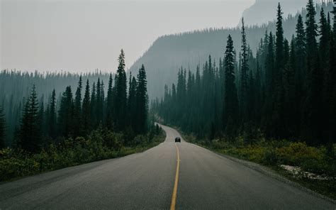road surrounded with trees nature landscape road trees