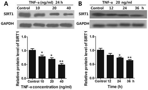 simvastatin attenuates tnfainduced apoptosis