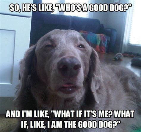 Derp Dog Meme - 9 signs your boyfriend will be a good dad based on how he treats his pup barkpost
