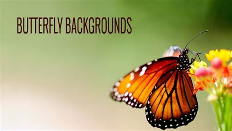 Background Home Screen Butterfly Wallpaper by 20 Beautiful Free Butterfly Backgrounds Freecreatives