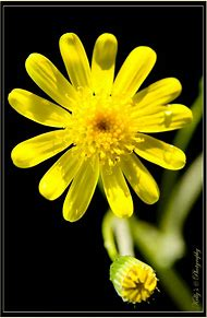 Best flower names ideas and images on bing find what youll love yellow flowers and their names mightylinksfo