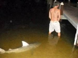 Shark Sneaks Up On Urinating Man