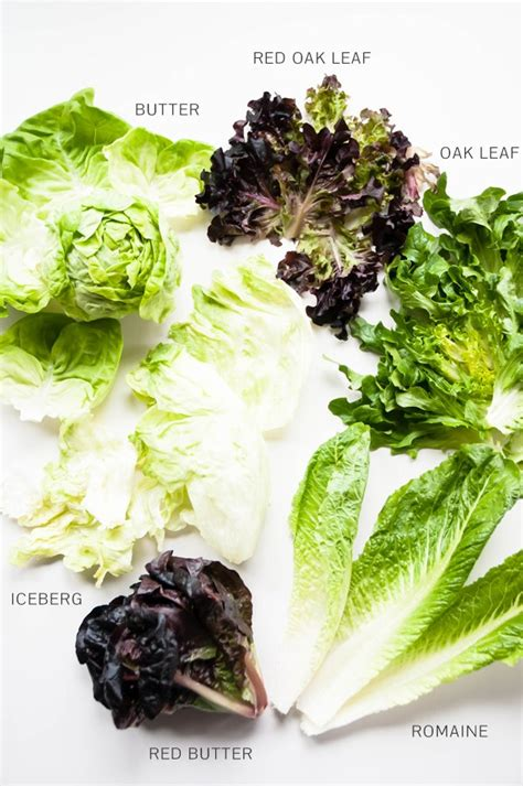 kinds of lettuce greens a guide to salad greens