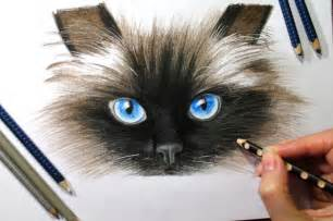 how to draw a realistic cat realistic cat drawing www pixshark images