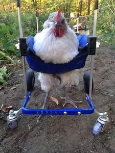 Dog Wheelchair Photo Gallery