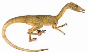 Compsognathus Jurassic Park | www.pixshark.com - Images ...