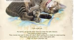 i miss my cat cats hellomisspatterson