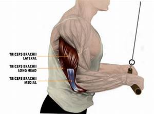 The Simple Way Everybody Screws Up Tricep Pushdowns